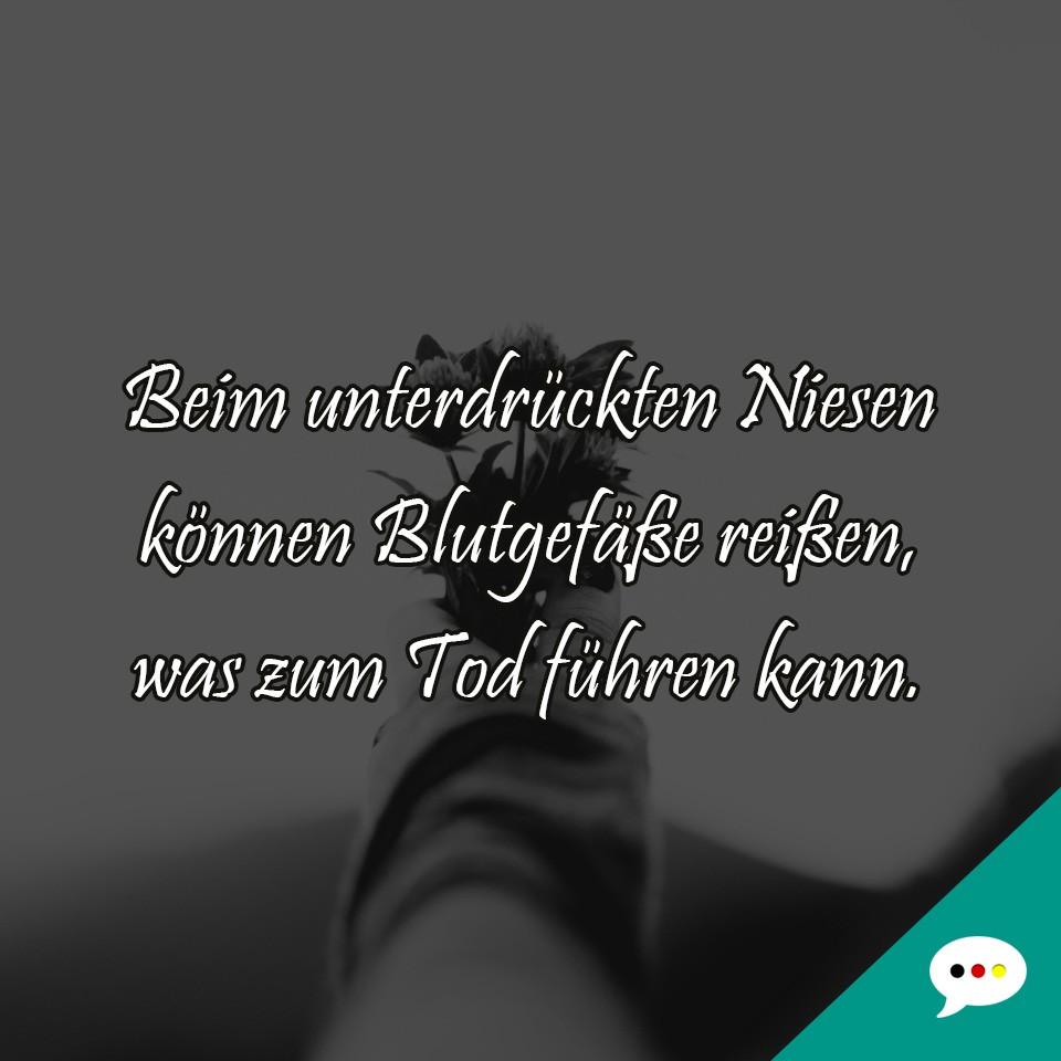 Witzige Und Nachdenkliche Spruchbilder Deutsche Sprüche Xxl