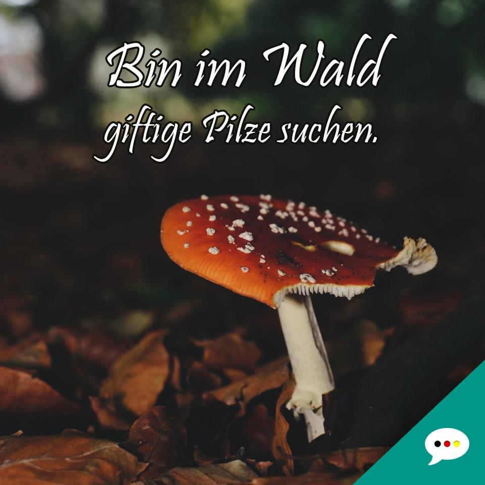 Pilznamen Lustig